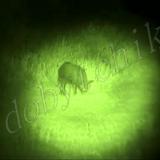 Подствольные фонари с зеленым светом для охоты — лазерные или светодиодные